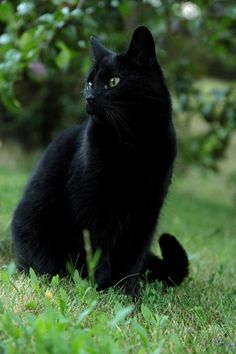 black cats are good luck. August 17th, Black Cat Appreciation Day!!! FTW