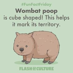 FUN FACT: Wombat poop is cube shaped! This helps it mark its territory. Fun Facts For Kids, Fun Facts About Animals, Act For Kids, Animal Facts, Wtf Fun Facts, Australia Fun Facts, Australia Day, Animal Activities, Fun Activities