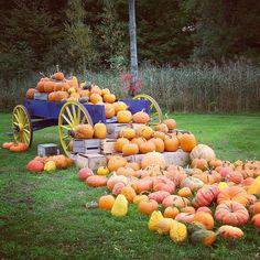 Pumkin season is here!