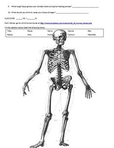 Skeletal And Muscular System Diagram 2002 Ford Expedition Fuse 58 Best Images Human Body Unit Introduction Or Review Of The Systems Webquest