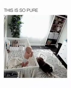 """i love how he stretches in the beginning like """"ok time to work the magic"""". i love how he stretches in the beginning like """"ok time to work the magic"""" . Cute Funny Animals, Cute Baby Animals, Funny Dogs, Animals And Pets, Baby Puppies, Cute Puppies, Cute Dogs, Cute Babies, Most Expensive Dog"""