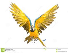 parrot flying - Google Search