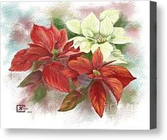 Poinsettia Painting Canvas Prints - Poinsettias for the Winter Holidays Canvas Print by Judy Filarecki