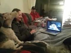Watch two dogs Skype with one another.  #Skype #Dogs