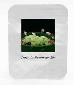 ADB Inc Crassula Nemorosa Seeds Antiradiation Succulent Plant -- Be sure to check out this awesome product.