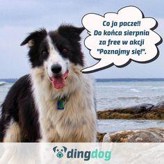 A ty widziałeś, że przedłużyliśmy Ci ważność konta o 30 dni? I przedłużymy każdemu, kto założy je do końca sierpnia. #DingDog #dog #app #pies #bordercollie #DogLovers