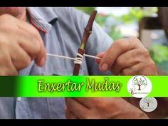 COMO ENXERTAR VIDEIRAS E DEMAIS PLANTAS - YouTube