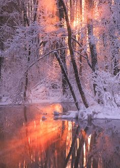 "enantiodromija: "" Crisp Morning by Andrus Allikas """