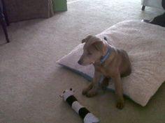 Enzo puppy babies