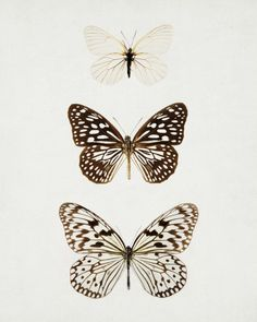 butterflies Mehr