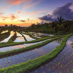 Jatiluwih Rice Field by Yudik Pradnyana on Moon Beach, Sand Beach, Beach Waves, Rice Terraces, Luxury Travel, Bali Travel, Exotic Places, Heaven On Earth, Instagram Images