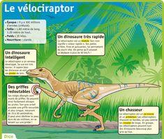 http://www.lepetitquotidien.fr/media/infography/mag/lpq-35/lpq35-le-velociraptor.jpg