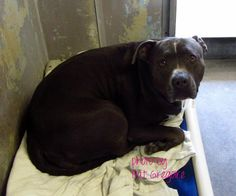 A4604246- this is cha cha, she is 10 yrs old, her family just dumper her here, she is in Ca.- if you are interested please contact me!!!
