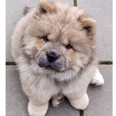 Cutedo you have any pets? #tumblr#teenage#teenager#teenvogue#teenagevogue#teen#teengrunge#tumblrteen#teentumble#queen#queenoftumblr#aloe#vogue#aloevogue#gaintrain#gainpost#grunge#grungeteens#arianagrande#jariana#grungeaesthetic#colour#love#followforfollow#starbucks#goals#dogs#puppy by aloe.vogue