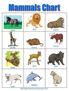 Mammals Chart  www.loving2learn.com