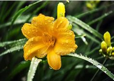 Flowers in the yard. #raindrops #flowers #photography via Instagram postcards_to_home