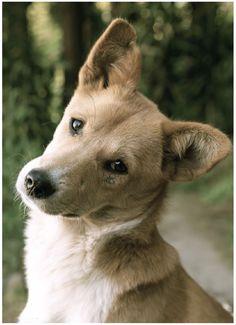The curious dog - pkwalkstheworld