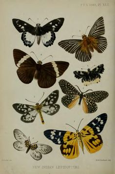On the lepidopterous insects of Bengal - BioStor