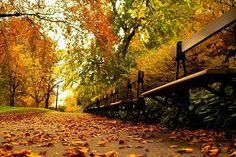 banc d'automne à clermont-ferrand