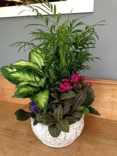 House Plants Decor, Patio Plants, Plant Decor, Indoor Plants, Container Flowers, Container Plants, Container Gardening, Exotic Plants, Exotic Flowers