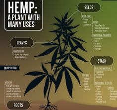 #Learn more about #hemp in #westvirginia Paint And Varnishes, Crop Insurance, Hemp Protein Powder, Tv Commercials, Herbal Remedies, West Virginia, Farmer, Worksheets, Ohio