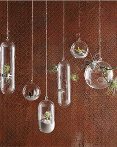 Hanging Pot Plants -- Shane Powers hanging glass bubble collection, West Elm USA, westelm.com
