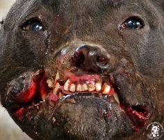 Please please stop this cruel practice of dog fighting!