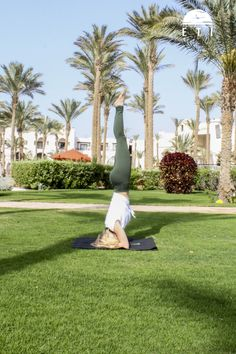Yoga Retreat in Ägypten Marsa Alam, Yoga Retreat, Hotels, Am Meer, Red Sea, Strand, Palace, Golf Courses, Recovery