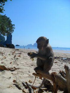 Monkey beach, Thailand