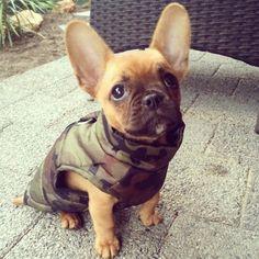 Cutest lil puppy. My darling French bulldog Bruce