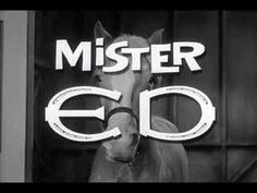 Mister Ed, the talking horse.  Now, there was a great t.v. show.  Here's the opening theme song. How about some Mr. Ed trivia. Mr. Ed was a golden Palomino. Mr. Ed's voice was a closely guarded secret, but it was actually Allan Lane, a former cowboy star.