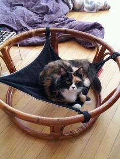 "Inara, enjoying her Cat Crib - fastened to the stand from a ""papasan"" chair :) Diy Teepee, Diy Dog Bed, Dog Beds, Cat Hammock, Cozy Chair, Used Chairs, Papasan Chair, Animal Projects, Four Legged"