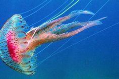 ¿Tienen las medusas el secreto de la vida eterna? | Informe21.com