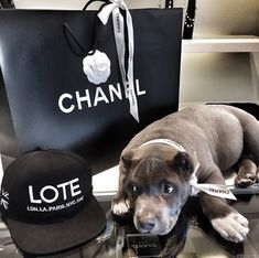 I love the modern rustic design style so much because its cozy, warm, and inviting. Just like this modern rustic bedro. Modern Rustic Bedrooms, Chanel, Paris, Animal Kingdom, Puppy Love, Riding Helmets, Fendi, Cute Animals, Nyc