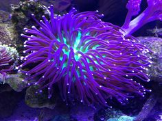 Saltwater Aquarium Fish - Find incredible deals on Saltwater Aquarium Fish and Saltwater Aquarium Fish accessories. Let us show you how to save money on Saltwater Aquarium Fish NOW! Saltwater Aquarium Beginner, Saltwater Aquarium Fish, Saltwater Tank, Freshwater Aquarium, Coral Reef Aquarium, Marine Aquarium, Coral Reefs, Best Aquarium Filter, Beautiful Sea Creatures