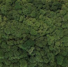 Moss Apple Green Kitchen, Artificial Hedges, Green Apartment, Green Facade, Vertical Garden Wall, Real Estate Office, Moss Wall, Coastal Gardens, Commercial Construction