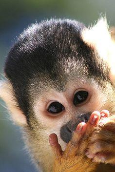 lovenaturewildlife:  I Love Nature & Wildlife wonderous-world: Squirrel Monkey byJoris Witsen via Tumblr