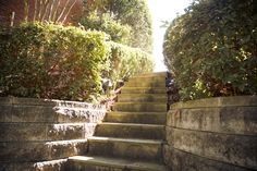 Stone steps enclosed by raised planting beds