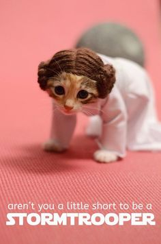 Adorable Princess Leia Kitten http://geekxgirls.com/article.php?ID=2360