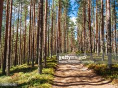 02-13 An empty dirt road running on top of a ridge filled with... #lieksa: 02-13 An empty dirt road running on top of a ridge… #lieksa