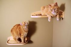 Mountain Cat Climbers  Cat Shelves  Package 1 by MountainCatTrees, $209.99