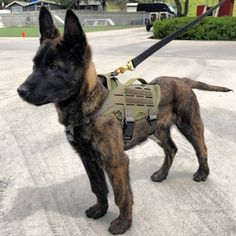 The Importance of Keeping Your Dog Mentally Stimulated (Raise your hand if your … - Pet Insurance Military Working Dogs, Military Dogs, Belgian Malinois Puppies, War Dogs, Cute Dogs And Puppies, Doggies, Shepherd Puppies, Cute Baby Animals, Animals Dog