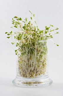 Eat your sprouts! Loaded with enzymes!