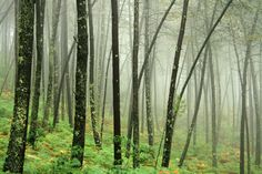magic-spelldust:    Niebla en el bosque (by rio en medio - Jose On/Off)
