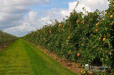 cool Apfelplantage Königreich Numero 14,  #Landleben