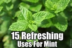 15 Refreshing Uses For Mint