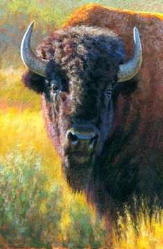 """Daily Paintworks - """"An American Heritage"""" - Original Fine Art for Sale - © Rita Kirkman Buffalo Animal, Buffalo Art, Western Comics, Animal Paintings, Animal Drawings, Buffalo Painting, Moose Pictures, Native American Images, Cow Art"""