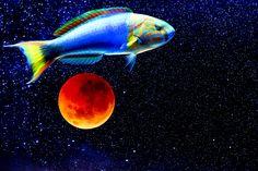 Theodore J. by Ben Stein Ben Stein, Fine Art Prints, Framed Prints, Rene Magritte, Tropical Fish, Still Image, Art World, Wood Print, Wonders Of The World