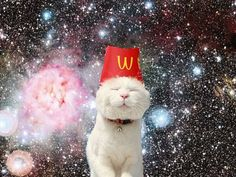 18 best Cats in space images on Pinterest | Space cat, Cats and ...