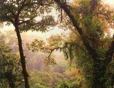 Jungle in Costa Rica #travel
